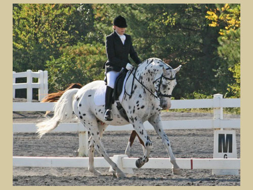 His Mir Image - 2007 Sporthorse National Champion- Dressage