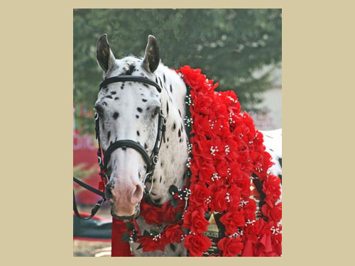 His Mir Image - 2007 Sporthorse National Champion